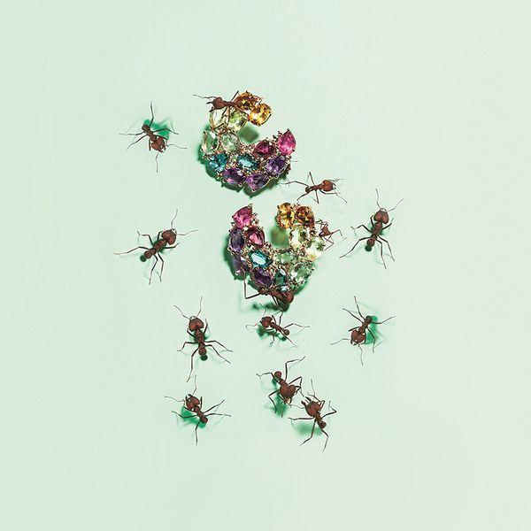 Sauer---Brincos-rock-candy